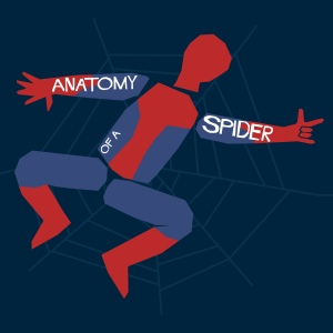 spider_anatomy
